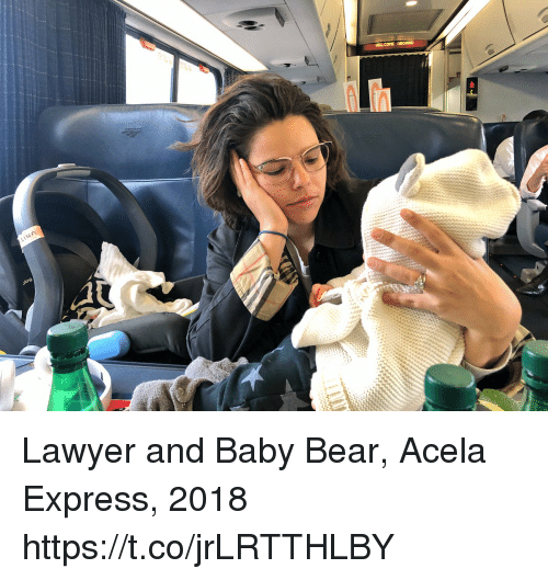 Lawyer, Memes, and Bear: Lawyer and Baby Bear, Acela Express, 2018 https://t.co/jrLRTTHLBY