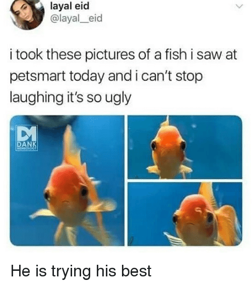 Petsmart: layal eid  @layal_eid  i took these pictures of a fish i saw at  petsmart today and i can't stop  laughing it's so ugly  DM  DA He is trying his best