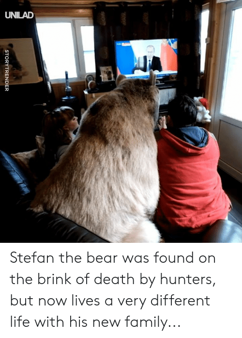 brink: ld  CS  STORYTRENDER Stefan the bear was found on the brink of death by hunters, but now lives a very different life with his new family...
