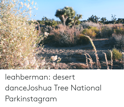 Instagram, Tumblr, and Blog: leahberman:  desert danceJoshua Tree National Parkinstagram