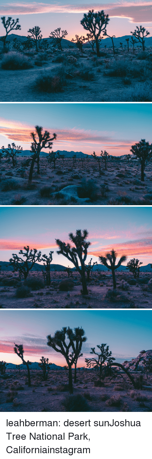 Instagram, Tumblr, and Blog: leahberman:  desert sunJoshua Tree National Park, Californiainstagram