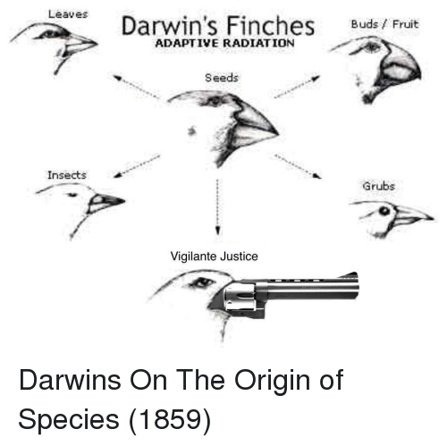 darwin: Leaves  Darwin's Finches Buds/ Fruit  ADAPTIVE RADIATION  Seeds  Insects  Grubs  Vigilante Justice Darwins On The Origin of Species (1859)