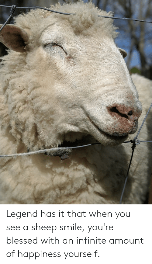 Blessed, Smile, and Happiness: Legend has it that when you see a sheep smile, you're blessed with an infinite amount of happiness yourself.