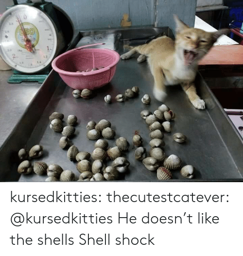 leo: LEO kursedkitties:  thecutestcatever:  @kursedkitties   He doesn't like the shells   Shell shock