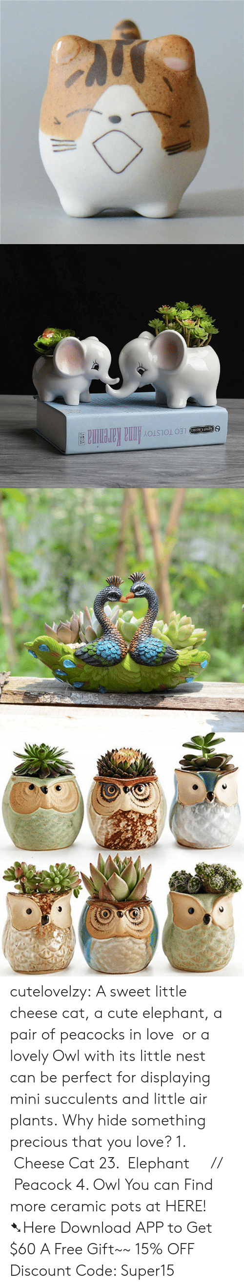 Leos: LEO TOLSTOYAnna Karenina  Signet Classics cutelovelzy: A sweet little cheese cat, a cute elephant, a pair of peacocks in love  or a lovely Owl with its little nest can be perfect for displaying mini succulents and little air plants. Why hide something precious that you love? 1.  Cheese Cat  23.  Elephant     //    Peacock  4. Owl  You can Find more ceramic pots at HERE!  ➷Here Download APP to Get $60  A Free Gift~~  15% OFF Discount Code: Super15