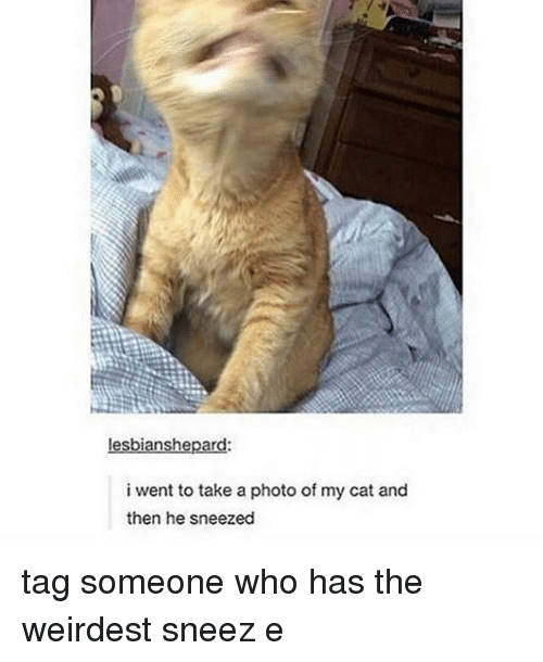 Tumblr, Tag Someone, and Cat: lesbianshepard:  i went to take a photo of my cat and  then he sneezed tag someone who has the weirdest sneez e