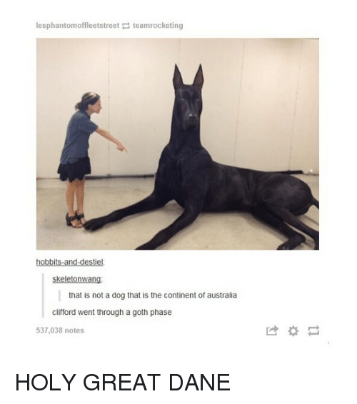 clifford: lesphantomoffleetstreet teamrocketing  hobbits-and-destiel  skeletonwang  that is not a dog that is the continent of australia  clifford went through a goth phase  537,038 notes  は* HOLY GREAT DANE