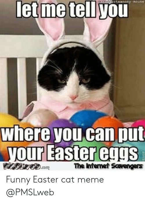 Pmslweb: let me tell you  where you can put  our Eastereggs  The htemet Scavengers Funny Easter cat meme @PMSLweb