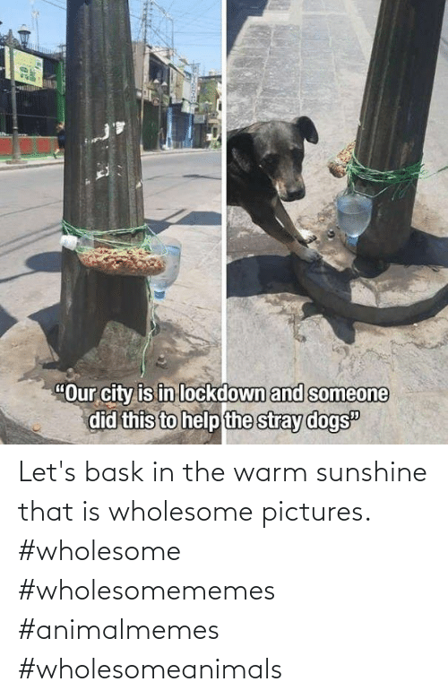 let's: Let's bask in the warm sunshine that is wholesome pictures. #wholesome #wholesomememes #animalmemes #wholesomeanimals