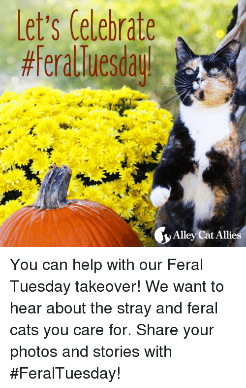 alley cats: Let's Celebrate  Alley Cat Allies You can help with our Feral Tuesday takeover! We want to hear about the stray and feral cats you care for.   Share your photos and stories with #FeralTuesday!