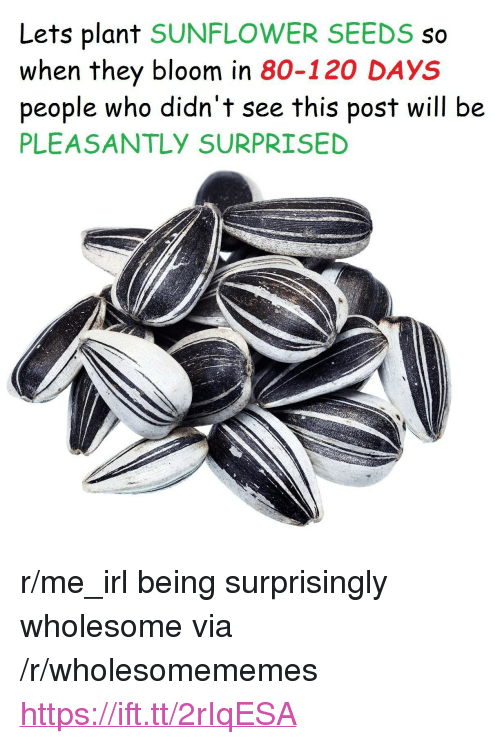"Wholesome, Irl, and Me IRL: Lets plant SUNFLOWER SEEDS so  when they bloom in 80-120 DAYS  people who didn't see this post will be  PLEASANTLY SURPRISED <p>r/me_irl being surprisingly wholesome via /r/wholesomememes <a href=""https://ift.tt/2rIqESA"">https://ift.tt/2rIqESA</a></p>"