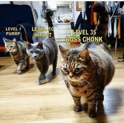 Memes, 🤖, and Boss: LEVEL 10  HITCAT  LEVEL 1  PURRP  LEVEL 35  BOSS CHONK
