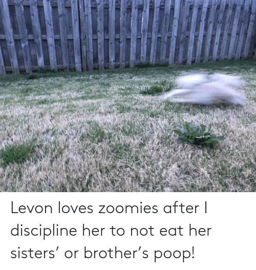sisters: Levon loves zoomies after I discipline her to not eat her sisters' or brother's poop!