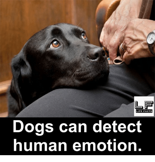 Detectives: LF  LIFE FACTS  Dogs can detect  human emotion.