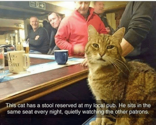 stool: LIC.  This cat has a stool reserved at my local pub. He sits in the  same seat every night, quietly watching the other patrons.