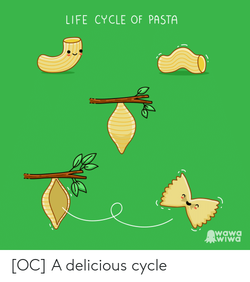 Life, Pasta, and Delicious: LIFE CYCLE OF PASTA  wawO  wiwa [OC] A delicious cycle
