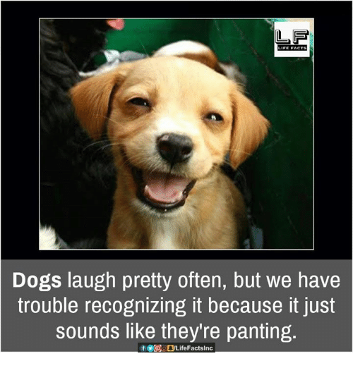 Dog Laughing: LIFE FACTS  Dogs laugh pretty often, but we have  trouble recognizing it because it just  Sounds like they're panting