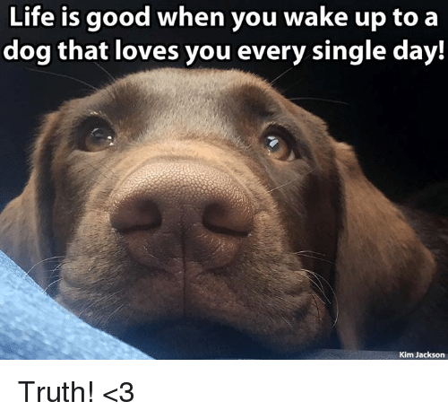 Life, Memes, and Good: Life is good when you wake up to a  dog that loves you every single day.  Kim Jackson Truth! <3