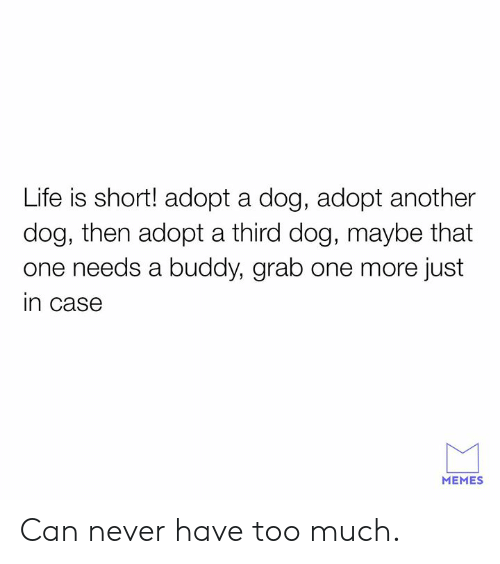 Dog Adopted: Life is short! adopt a dog, adopt another  dog, then adopt a third dog, maybe that  one needs a buddy, grab one more just  in case  MEMES Can never have too much.