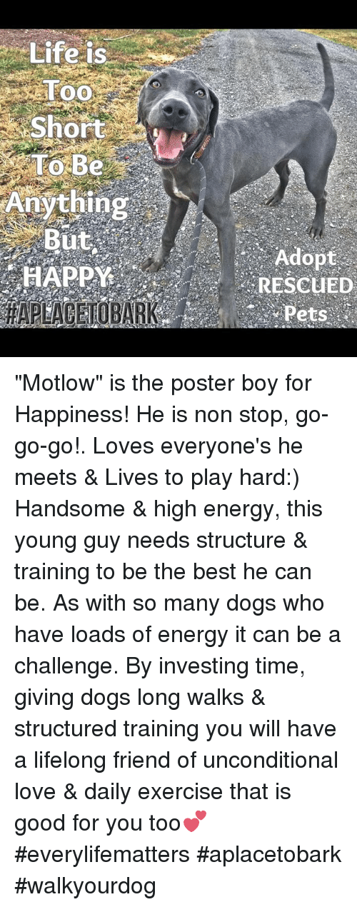 "High Energy: Life is  Too  Short  To Be  Anything  But  RESCUED ""Motlow"" is the poster boy for Happiness! He is non stop, go-go-go!.   Loves everyone's he meets & Lives to play hard:) Handsome & high energy, this young guy needs structure & training to be the best he can be. As with so many dogs who have loads of energy it can be a challenge. By investing time, giving dogs long walks & structured training you will have a lifelong friend of unconditional love & daily exercise that is good for you too💕  #everylifematters #aplacetobark #walkyourdog"