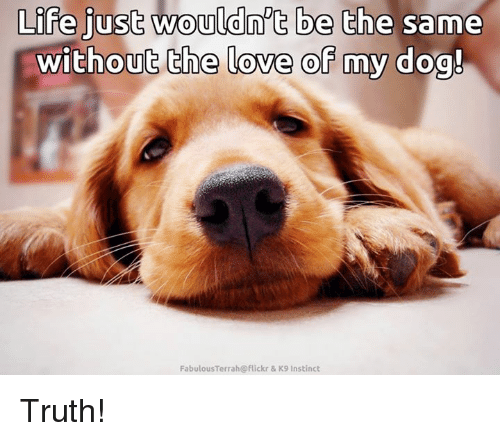 fabulousness: Life just wouldn't be the same  without the love of my dog!  Fabulous Terra h@flickr & K9 Instinct Truth!