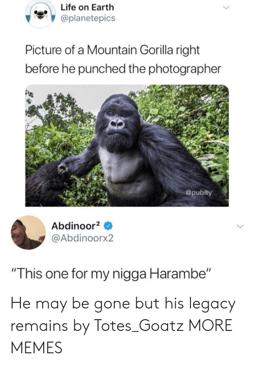 "Dank, Life, and Memes: Life on Earth  oplanetepics  Picture of a Mountain Gorilla right  before he punched the photographer  @pubity  Abdinoor  @Abdinoorx2  ""This one for my nigga Harambe"" He may be gone but his legacy remains by Totes_Goatz MORE MEMES"