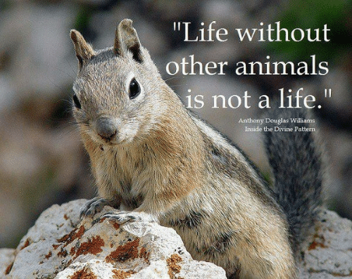 "Animals, Life, and Memes: ""Life without  other animals  is not a life.""  Anthony Douglas Williams  Inside the Divine Pattern"