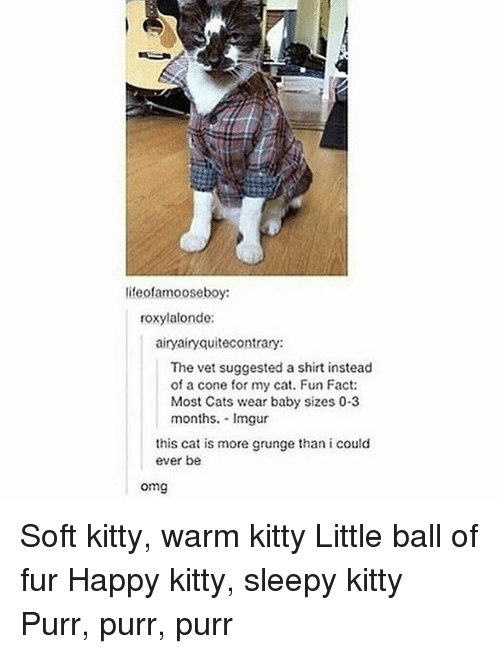 Coneing: lifeofamooseboy:  roxylalonde:  airyairyquitecontrary:  The vet suggested a shirt instead  of a cone for my cat. Fun Fact:  Most Cats wear baby sizes 03  months. Imgur  this cat is more grunge than i could  ever be  omg Soft kitty, warm kitty Little ball of fur Happy kitty, sleepy kitty Purr, purr, purr