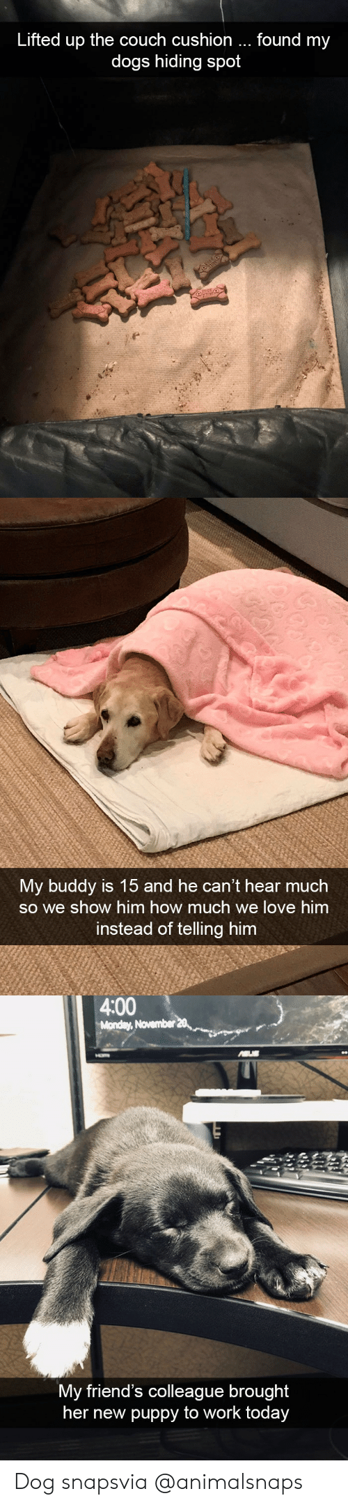 Dogs, Friends, and Love: Lifted up the couch cushion  found my  dogs hiding spot   My buddy is 15 and he can't hear much  so we show him how much we love him  instead of telling him   4:00  Monday, November  My friend's colleague brought  her new puppy to work to  day Dog snapsvia @animalsnaps