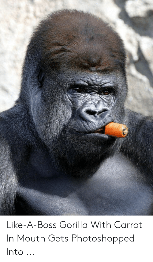 Boss, Gorilla, and Carrot: Like-A-Boss Gorilla With Carrot In Mouth Gets Photoshopped Into ...