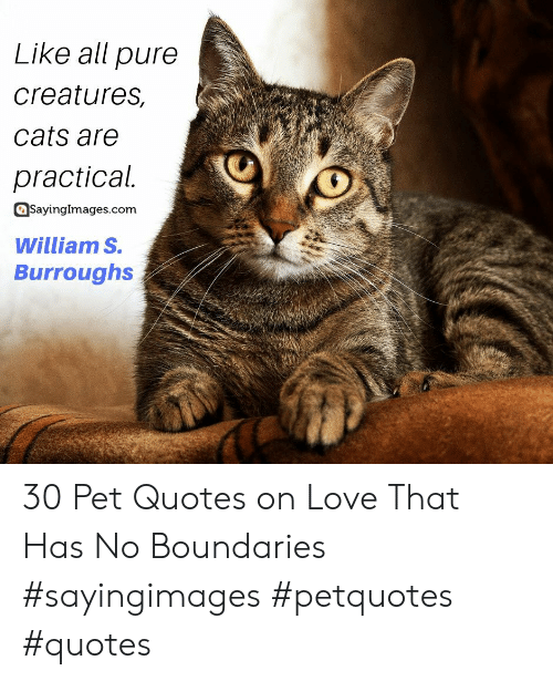 Cats, Love, and Quotes: Like all pure  creatures,  cats are  practical.  SayingImages.com  William S.  Burroughs 30 Pet Quotes on Love That Has No Boundaries #sayingimages #petquotes #quotes