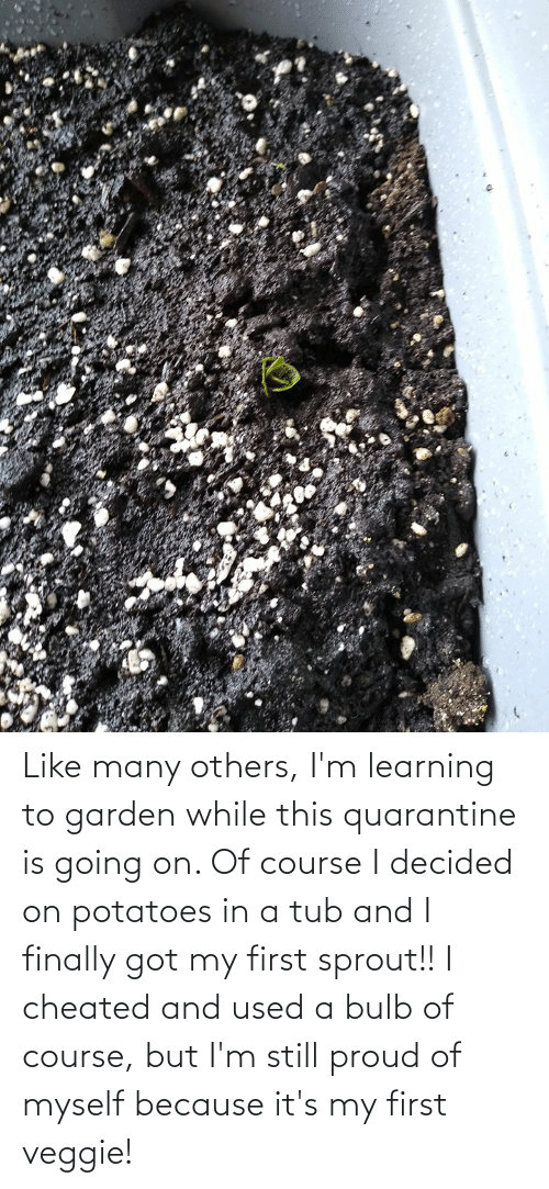 tub: Like many others, I'm learning to garden while this quarantine is going on. Of course I decided on potatoes in a tub and I finally got my first sprout!! I cheated and used a bulb of course, but I'm still proud of myself because it's my first veggie!