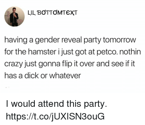 Crazy, Funny, and Party: LIL BOTTOMTEXT  having a gender reveal party tomorrow  for the hamster i just got at petco.nothin  crazy just gonna flip it over and see if it  has a dick or whatever I would attend this party. https://t.co/jUXISN3ouG