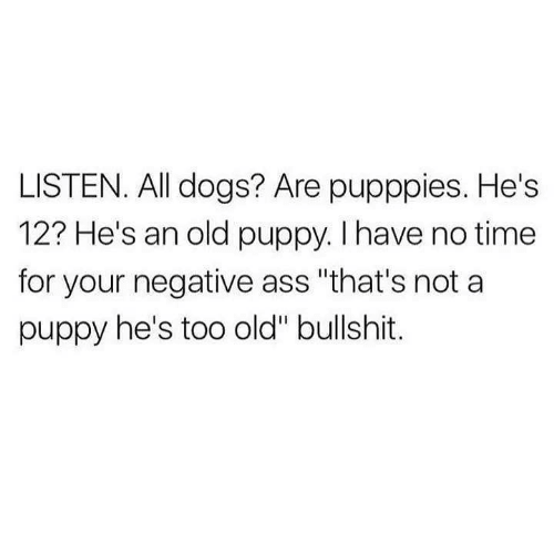 """Ass, Dogs, and Memes: LISTEN. All dogs? Are pupppies. He's  12? He's an old puppy. I have no time  for your negative ass """"that's not a  puppy he's too old"""" bullshit."""