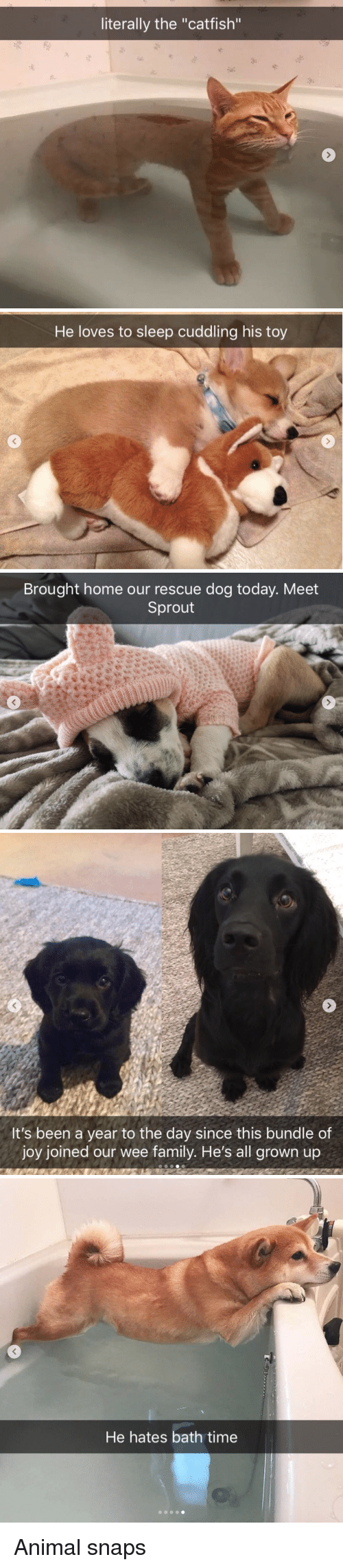 """Catfished: literally the """"catfish""""   He loves to sleep cuddling his toy   Brought home our rescue dog today. Meet  Sprout   It's been a year to the day since this bundle of  joy joined our wee family. He's all grown up   He hates bath time Animal snaps"""