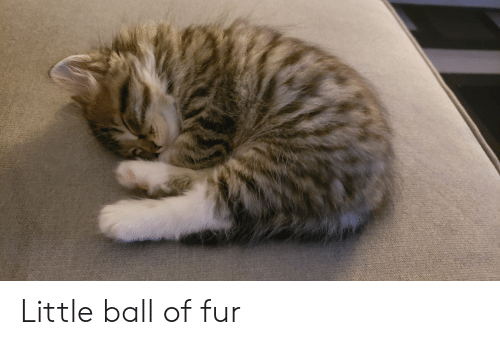 Fur, Ball, and Little: Little ball of fur