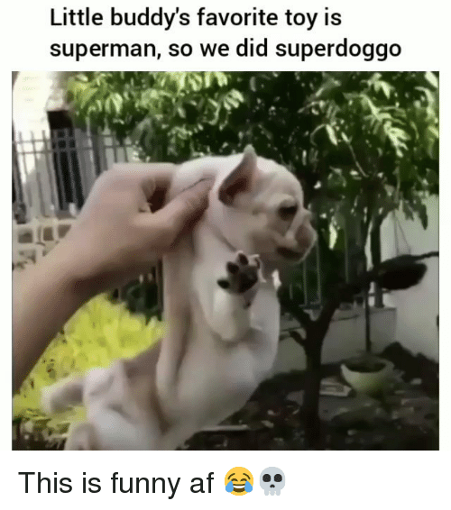 buddys: Little buddy's favorite toy is  superman, so we did superdoggo This is funny af 😂💀