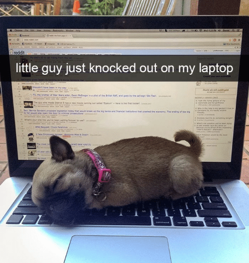 Laptop, Guy, and Just: little guy just knocked out on my laptop