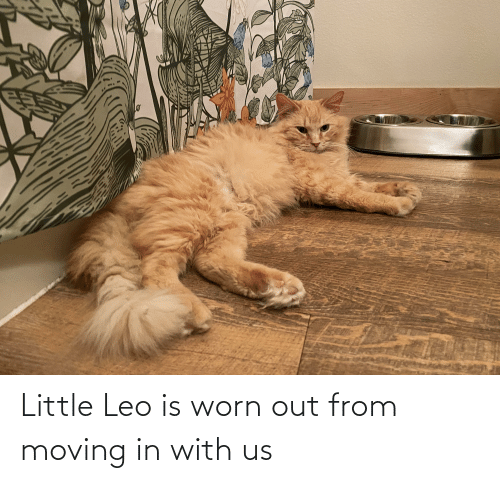 moving in: Little Leo is worn out from moving in with us