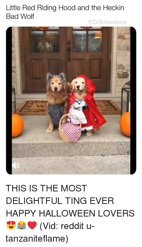 delightful: Little Red Riding Hood and the Heckin  Bad Wolf  @DrSmashlove THIS IS THE MOST DELIGHTFUL TING EVER HAPPY HALLOWEEN LOVERS 😍😂❤️ (Vid: reddit u-tanzaniteflame)