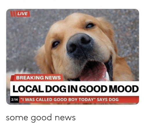 """Some Good: LIVE  BREAKING NEWS  LOCAL DOG IN GOOD MOOD  