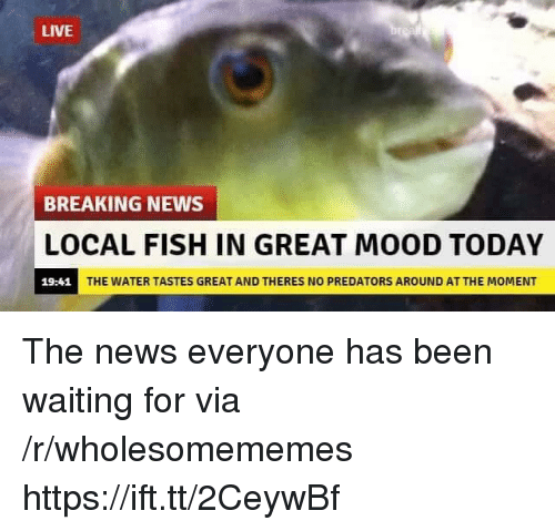 Mood, News, and Breaking News: LIVE  BREAKING NEWS  LOCAL FISH IN GREAT MOOD TODAY  19:41  THE WATER TASTES GREAT AND THERES NO PREDATORS AROUND AT THE MOMENT The news everyone has been waiting for via /r/wholesomememes https://ift.tt/2CeywBf