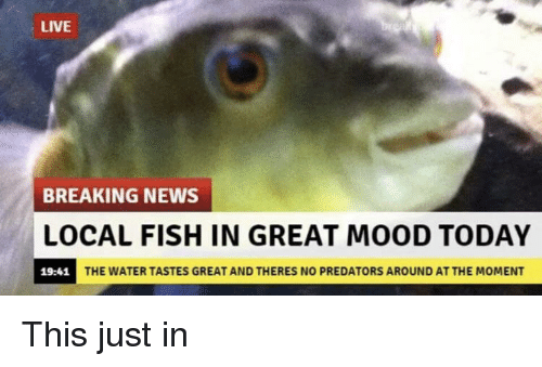 Mood, News, and Breaking News: LIVE  BREAKING NEWS  LOCAL FISH IN GREAT MOOD TODAY  19-41 THE WATER TASTES GREAT AND THERES NOo  THE WATER TASTES GREAT AND THERES NO PREDATORS AROUND AT THE MOMENT This just in