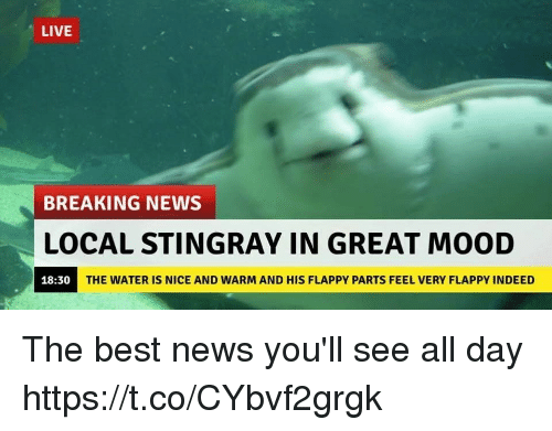 Funny, Mood, and News: LIVE  BREAKING NEWS  LOCAL STINGRAY IN GREAT MOOD  18:30  THE WATER IS NICE AND WARM AND HIS FLAPPY PARTS FEEL VERY FLAPPY INDEED The best news you'll see all day https://t.co/CYbvf2grgk