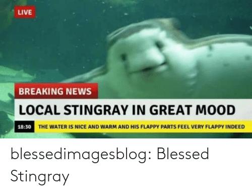 breaking: LIVE  BREAKING NEWS  LOCAL STINGRAY IN GREAT MOOD  18:30 THE WATER IS NICE AND WARM AND HIS FLAPPY PARTS FEEL VERY FLAPPY INDEED blessedimagesblog:  Blessed Stingray