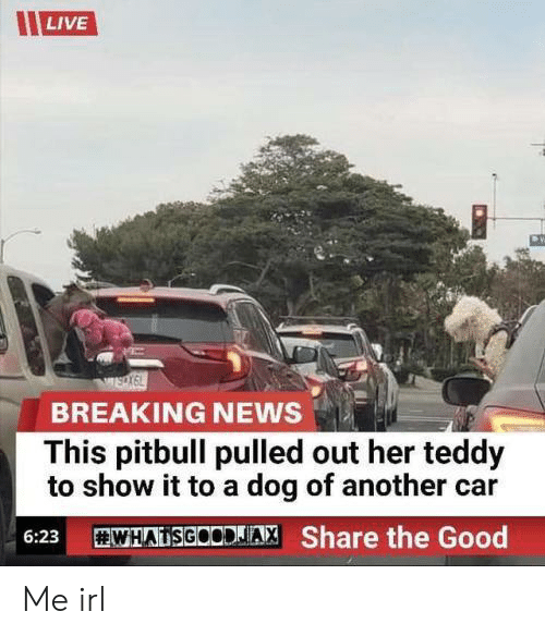 Pulled Out: LIVE  BREAKING NEWS  This pitbull pulled out her teddy  to show it to a dog of another car  WHADSGOODJA, Share the Good  6:23 Me irl