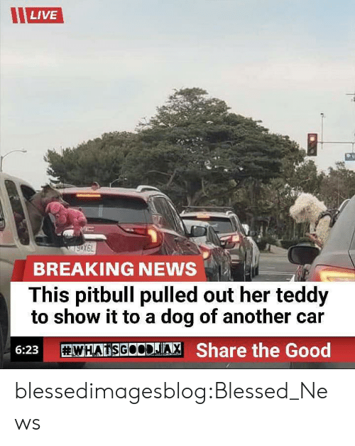 Pulled Out: LIVE  BREAKING NEWS  This pitbull pulled out her teddy  to show it to a dog of another car  WHATSGOODJA, Share the Good  6:23 blessedimagesblog:Blessed_News
