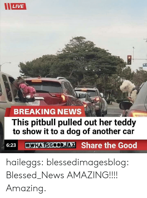 Pulled Out: LIVE  BREAKING NEWS  This pitbull pulled out her teddy  to show it to a dog of another car  WHATSGOODJA, Share the Good  6:23 haileggs:  blessedimagesblog:  Blessed_News  AMAZING!!!! Amazing.