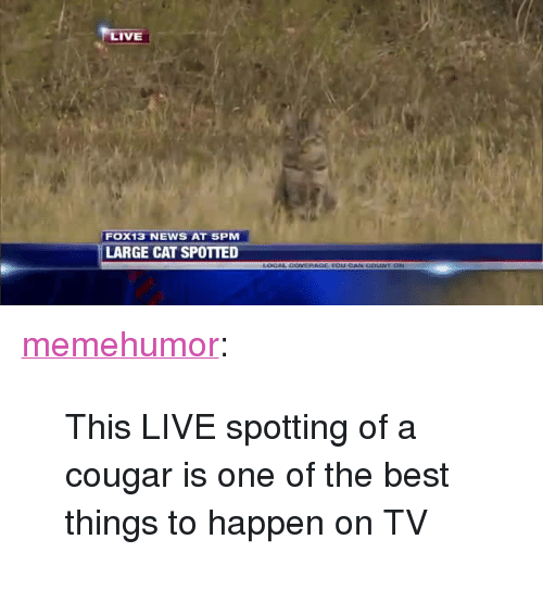 "News, Tumblr, and Best: LIVE  FOX13 NEWS AT SPM  LARGE CAT SPOTTED <p><a href=""http://memehumor.net/post/166393873588/this-live-spotting-of-a-cougar-is-one-of-the-best"" class=""tumblr_blog"">memehumor</a>:</p>  <blockquote><p>This LIVE spotting of a cougar is one of the best things to happen on TV</p></blockquote>"