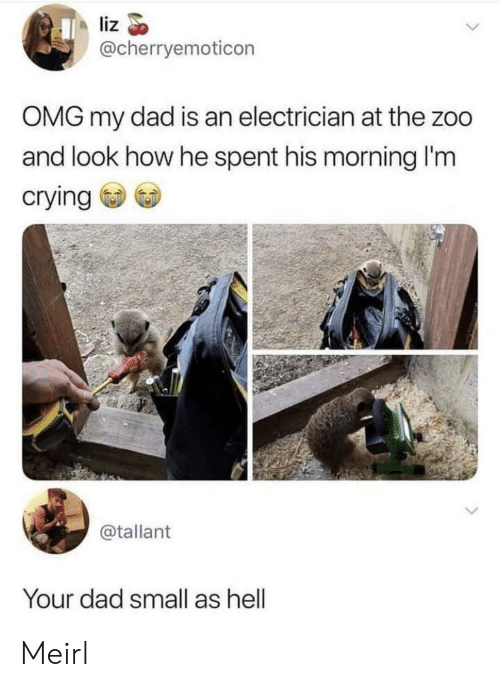 Crying, Dad, and Omg: liz  @cherryemoticon  OMG my dad is an electrician at the zoo  and look how he spent his morning I'm  crying  @tallant  Your dad small as hell Meirl